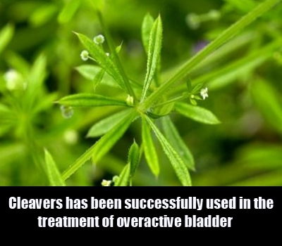 cleavers