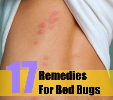 Bed Bugs Herbal Treatment
