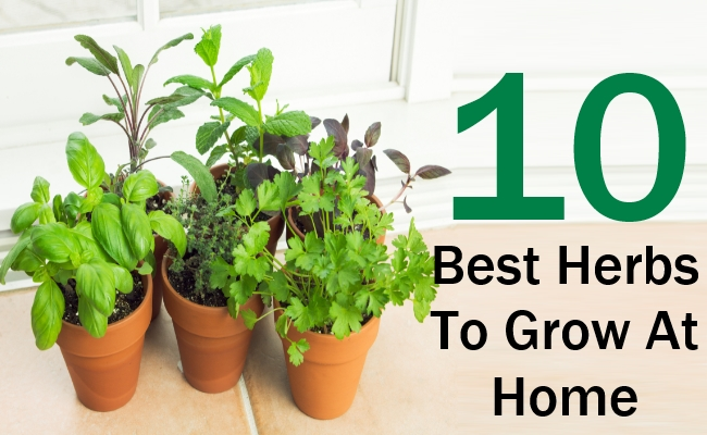 10 best herbs to grow at home search herbal home remedy. Black Bedroom Furniture Sets. Home Design Ideas
